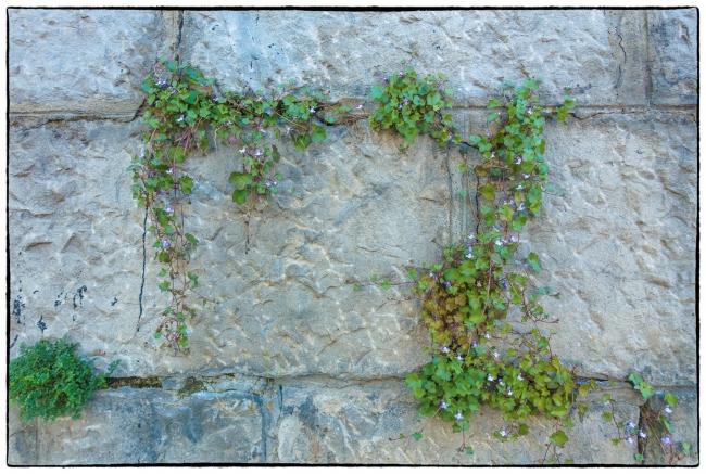wallwithplants-1
