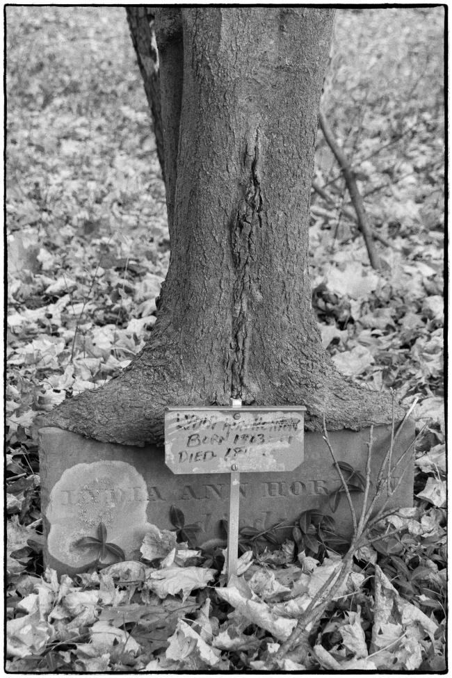 gravestonetree-1