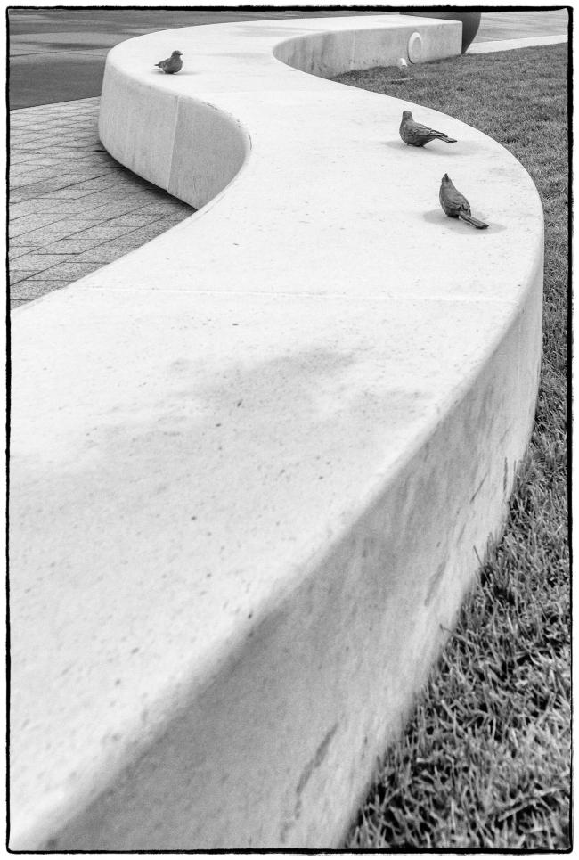 stonebirdswall-1