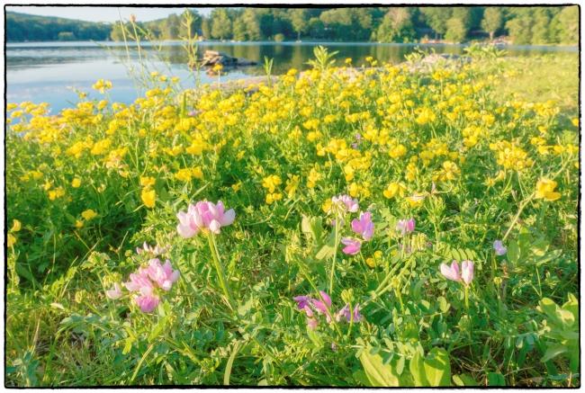 flowersspurbeach-