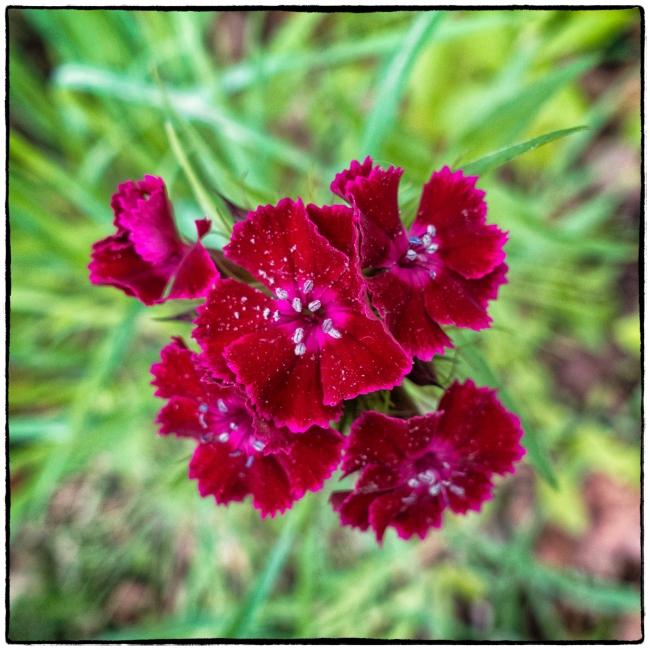 purpleflower-