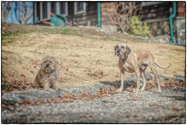 neighborhooddogs-1
