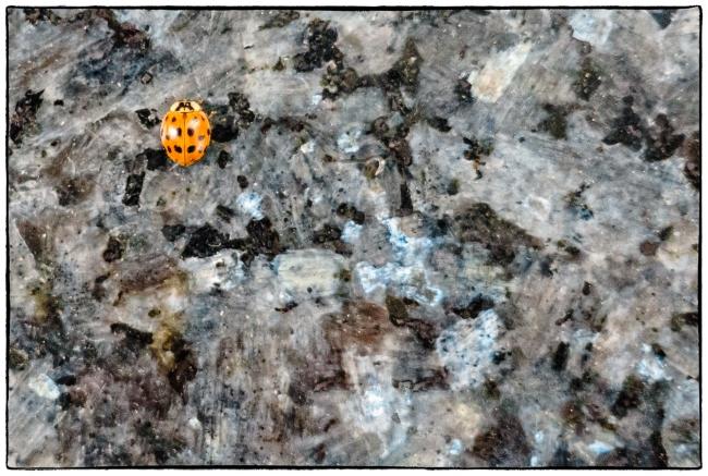 ladybugs-1