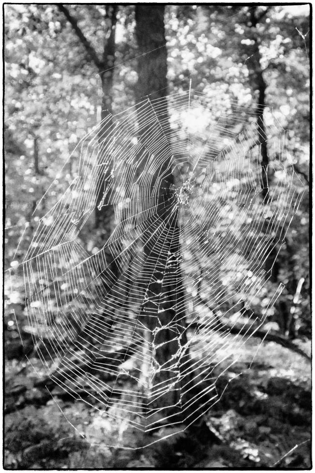 spiderweb-1