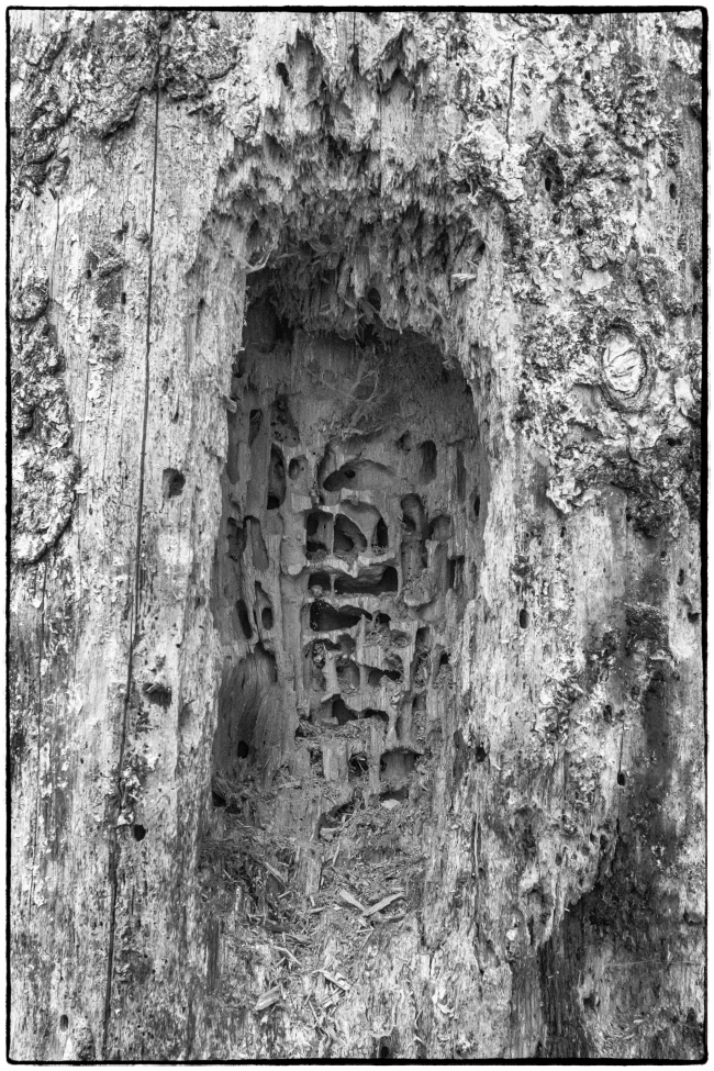 woodpeckerwork-1