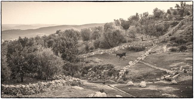 jordanc1980-19
