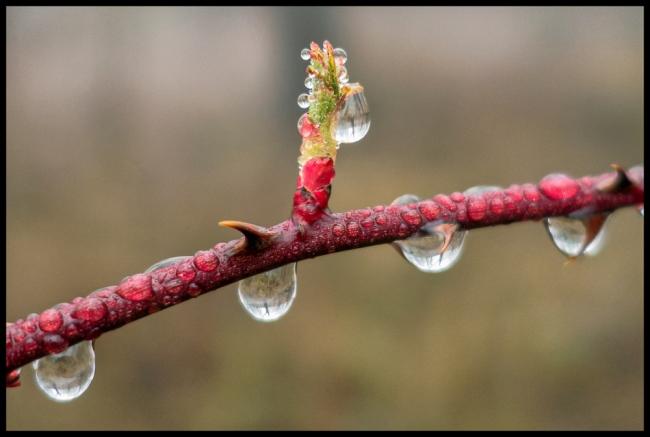 waterdroplets-1
