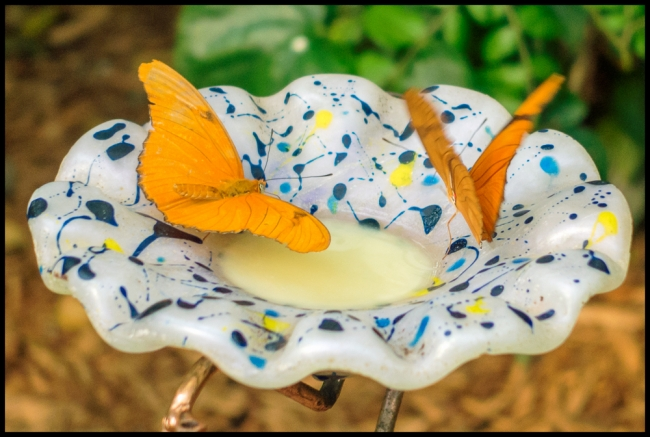 bronxzoobutterfly-2