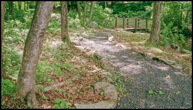 woodlandpath-1-of-1