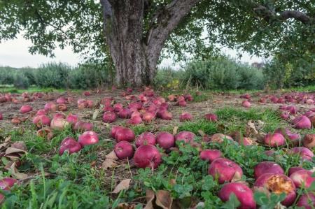 bartonsorchard-12
