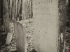baxter-cemetery-10