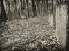 baxter-cemetery-14