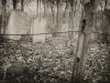 baxter-cemetery-4