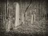 baxter-cemetery-7