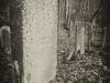 baxter-cemetery-9