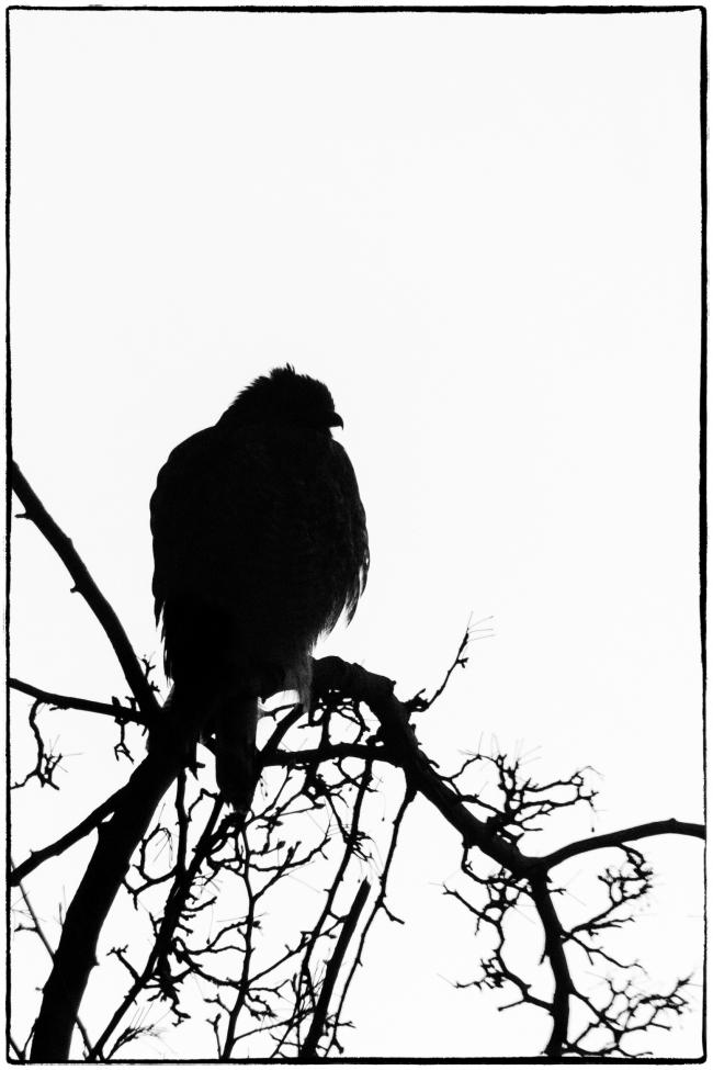 birdintree-1