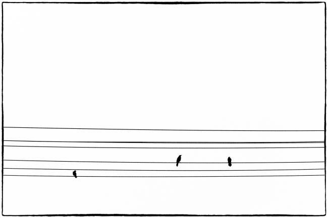 birdswire-1