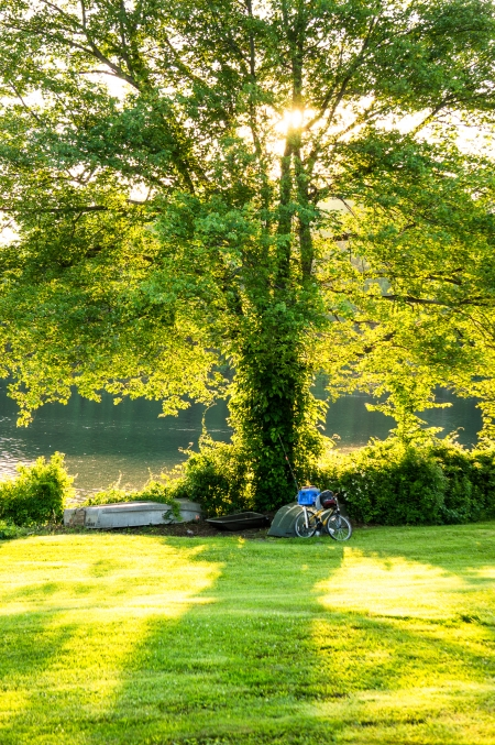 Backlit tree on Lake Gleneida