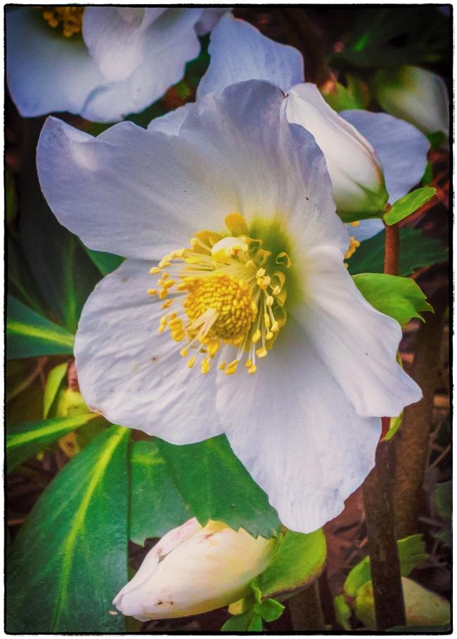 decflowers-1