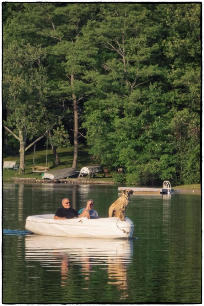 dogsonboat-1