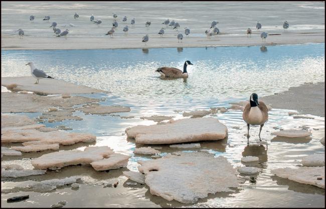 waterbirds-1