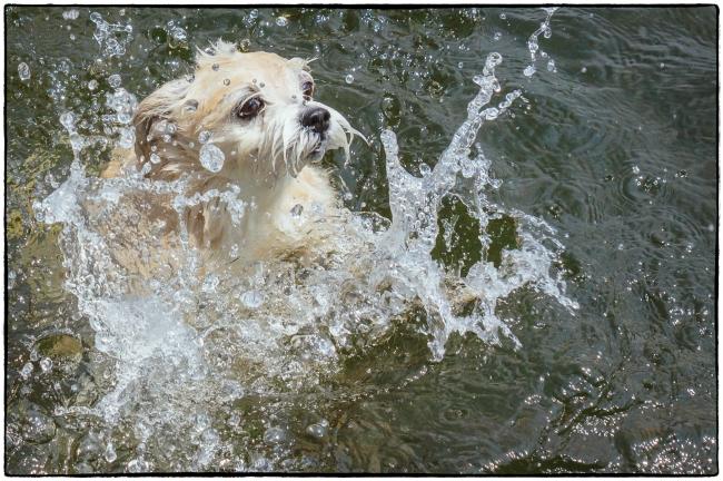 harleyswim-1