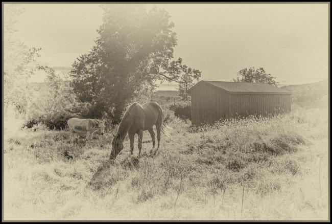 oldtimephotograph-1