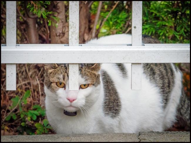 cat-1-of-1