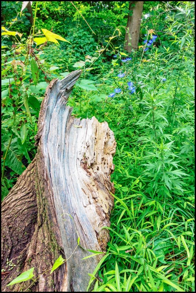 treetrunk&cornflowers-1