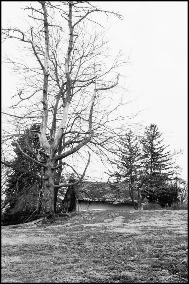 tree&shed-1