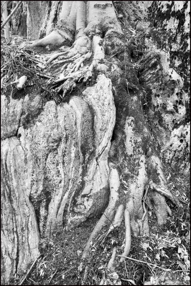 treerootsrocks-1