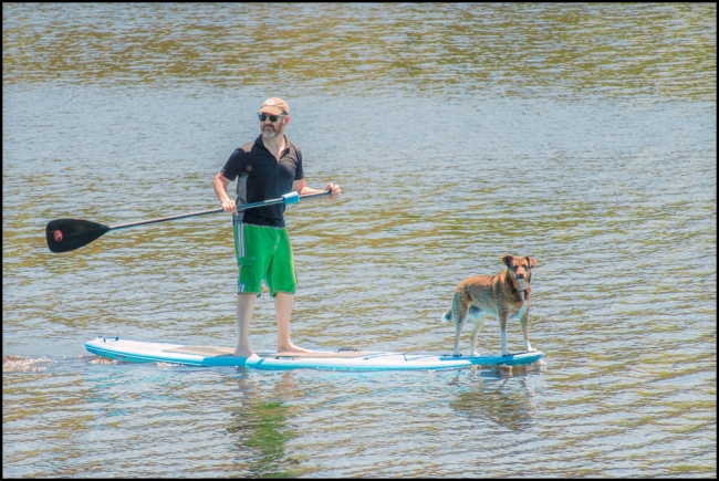 1_dogonpaddleboard-1-of-1