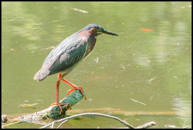 birdphotography2-1-of-5