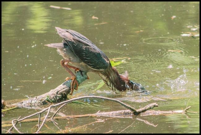 birdphotography2-3-of-5