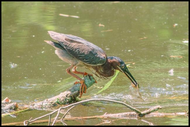 birdphotography2-4-of-5