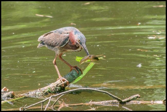 birdphotography2-5-of-5