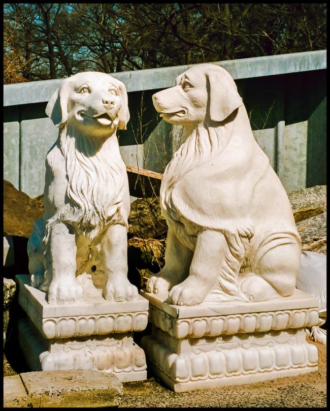irvington-pairofdogs-1