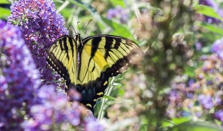 monarchbutterflies-1