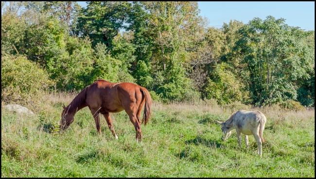 glynwoodhorse&donkey-1