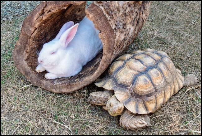 tortoiseandhair-1