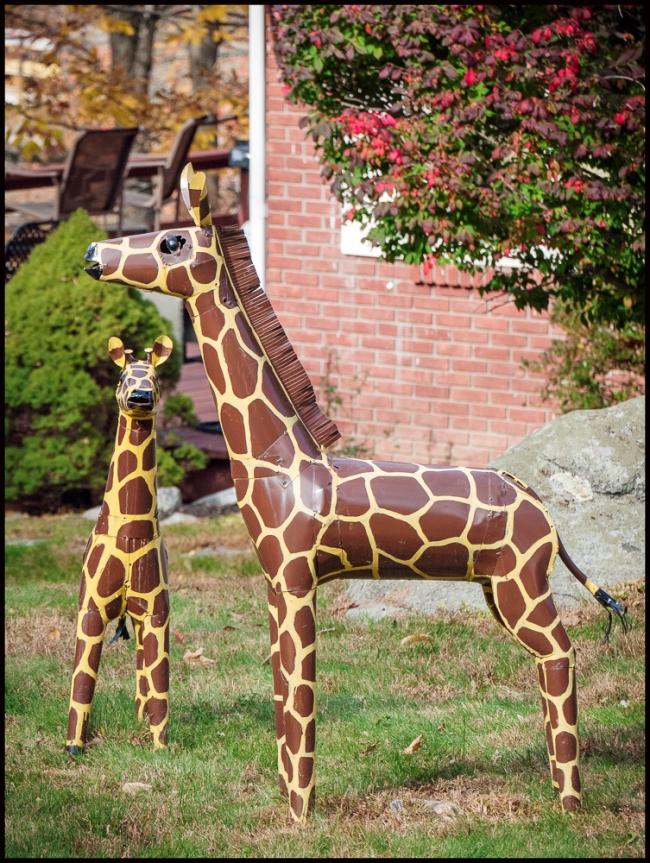 giraffes-2-of-2