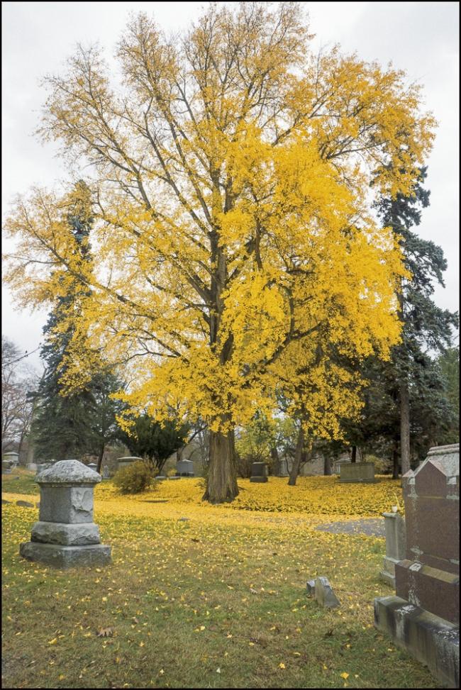 sleepyhollowtrees-1