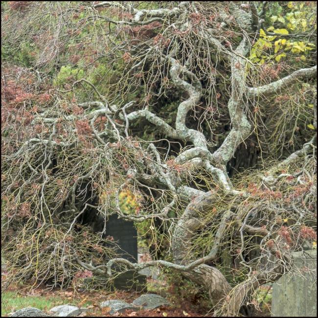 sleepyhollowtrees-2