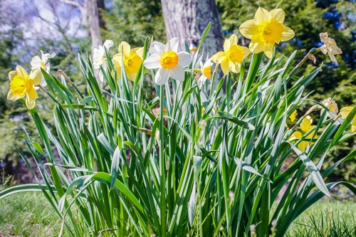springflowers-8