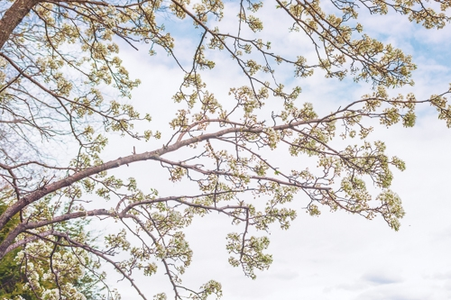 springflowers-9