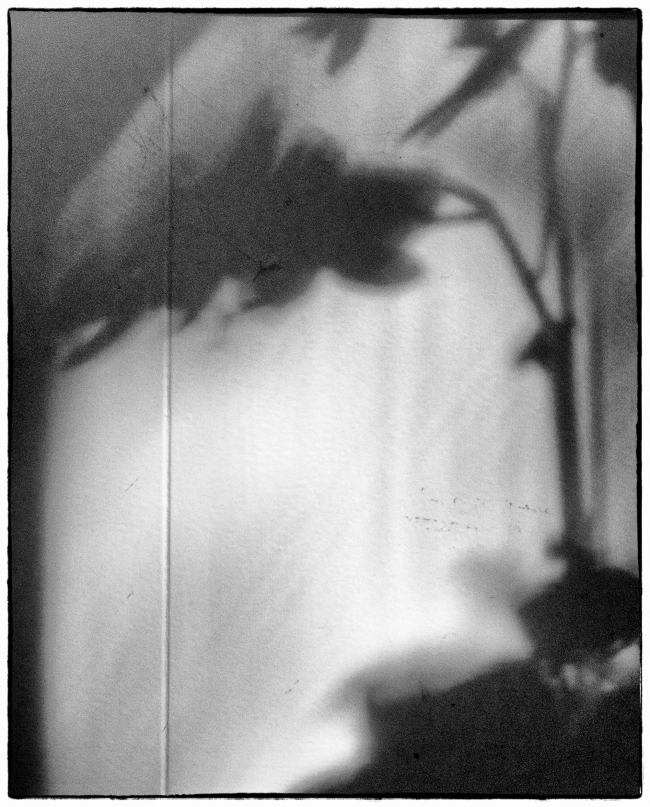 orchidshadows-1