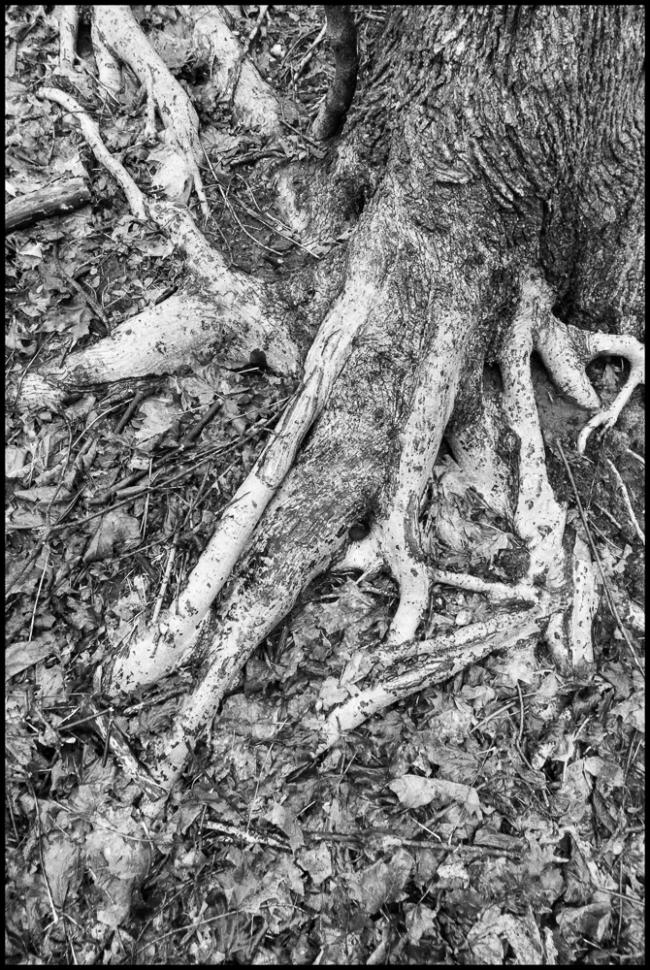 rootsandvines-1