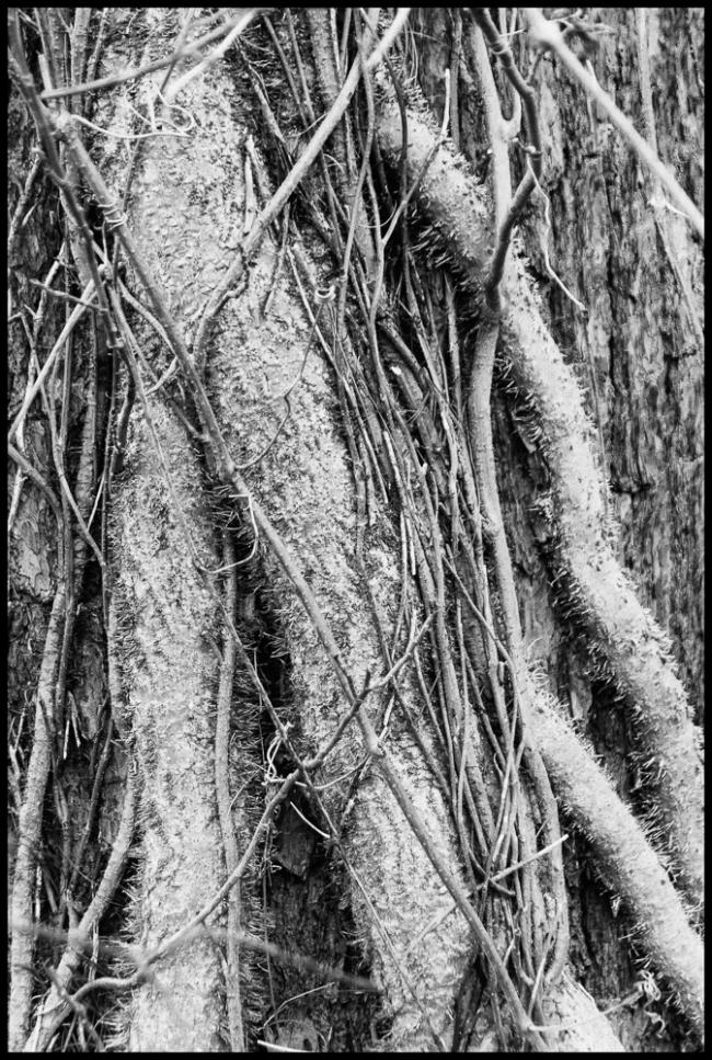 rootsandvines-2