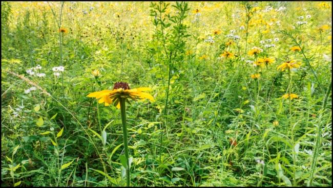 wiccoppereservoirwildflowers-