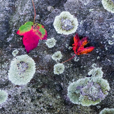 Fall leaves on stone